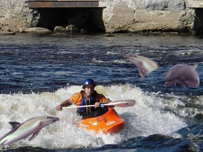 dolphinbros.jpg
